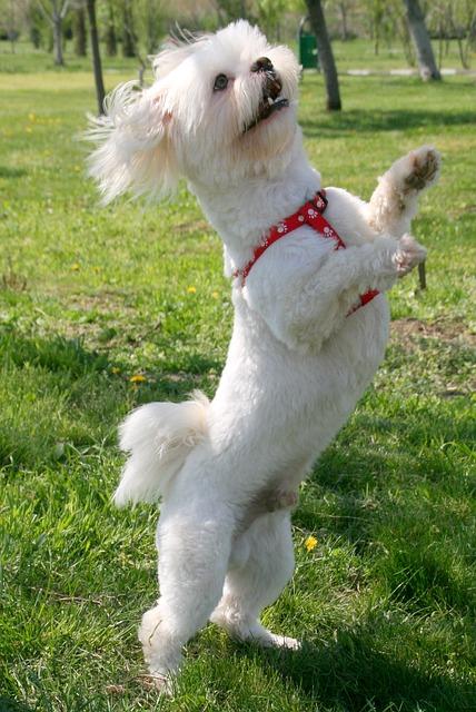 cagnolino ballerino