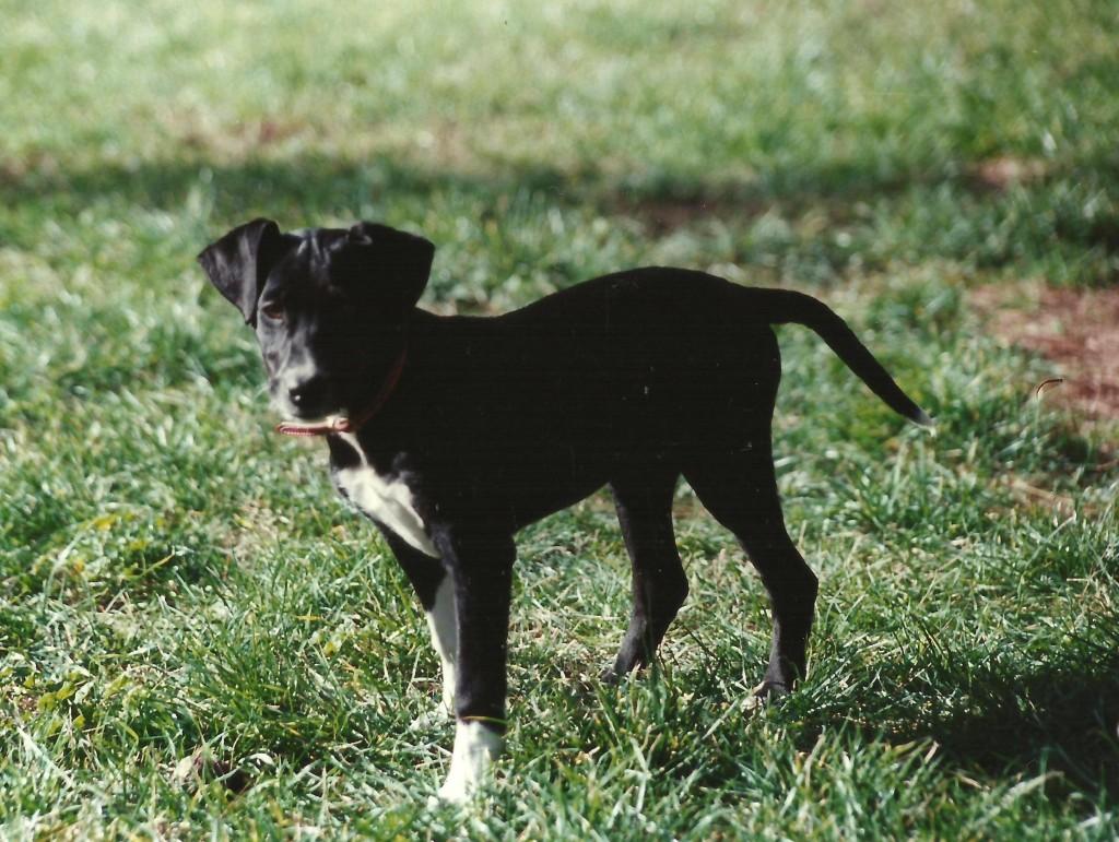 roxie cucciola 001